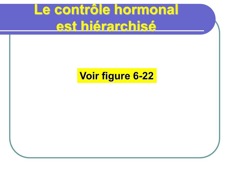 Le contrôle hormonal est hiérarchisé Voir figure 6-22