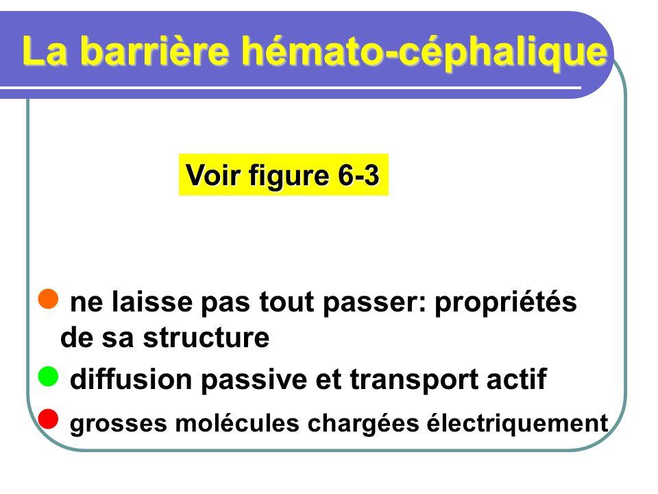 La barrière hémato-céphalique ne laisse pas tout passer: propriétés de sa structure diffusion passive et transport actif grosses molécules chargées électriquement Voir figure 6-3