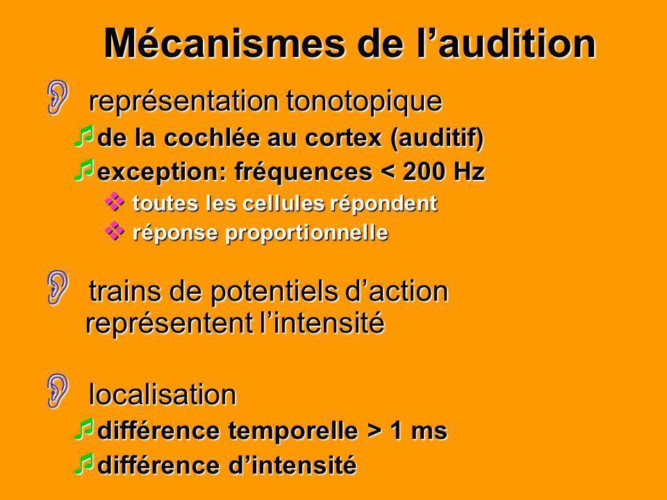 Mécanismes de laudition représentation tonotopique représentation tonotopique de la cochlée au cortex (auditif) de la cochlée au cortex (auditif) exce