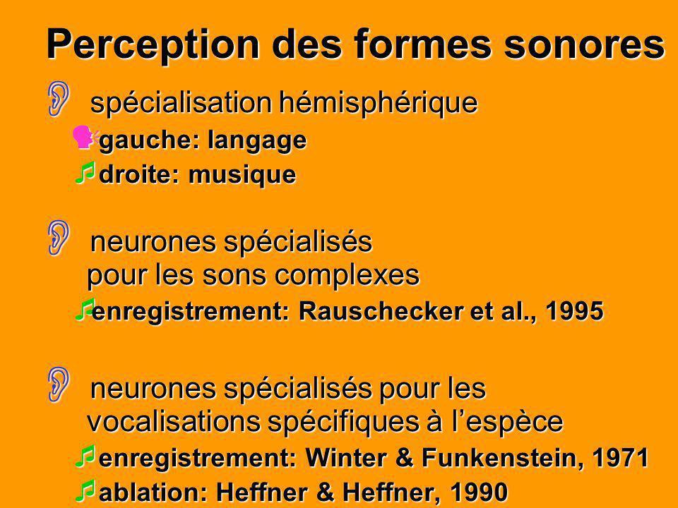 Perception des formes sonores spécialisation hémisphérique spécialisation hémisphérique gauche: langage gauche: langage droite: musique droite: musiqu