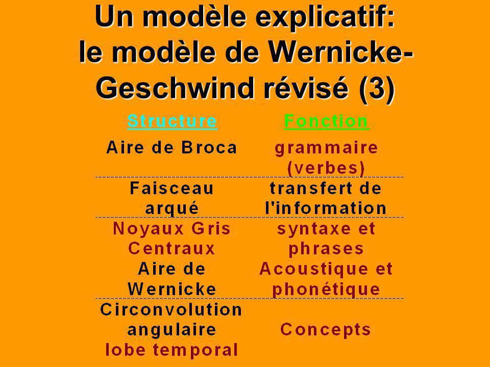 Un modèle explicatif: le modèle de Wernicke- Geschwind révisé (3)