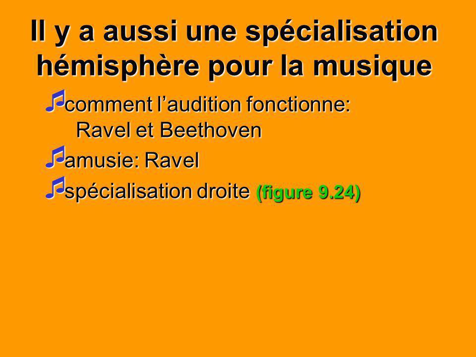 Il y a aussi une spécialisation hémisphère pour la musique comment laudition fonctionne: Ravel et Beethoven comment laudition fonctionne: Ravel et Bee