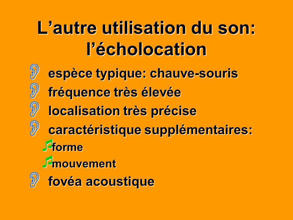 Lautre utilisation du son: lécholocation espèce typique: chauve-souris espèce typique: chauve-souris fréquence très élevée fréquence très élevée local