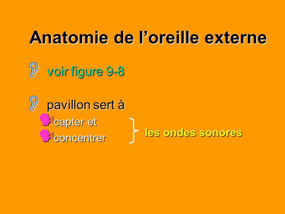Anatomie de loreille externe voir figure 9-8 voir figure 9-8 pavillon sert à pavillon sert à capter et capter et concentrer concentrer les ondes sonor