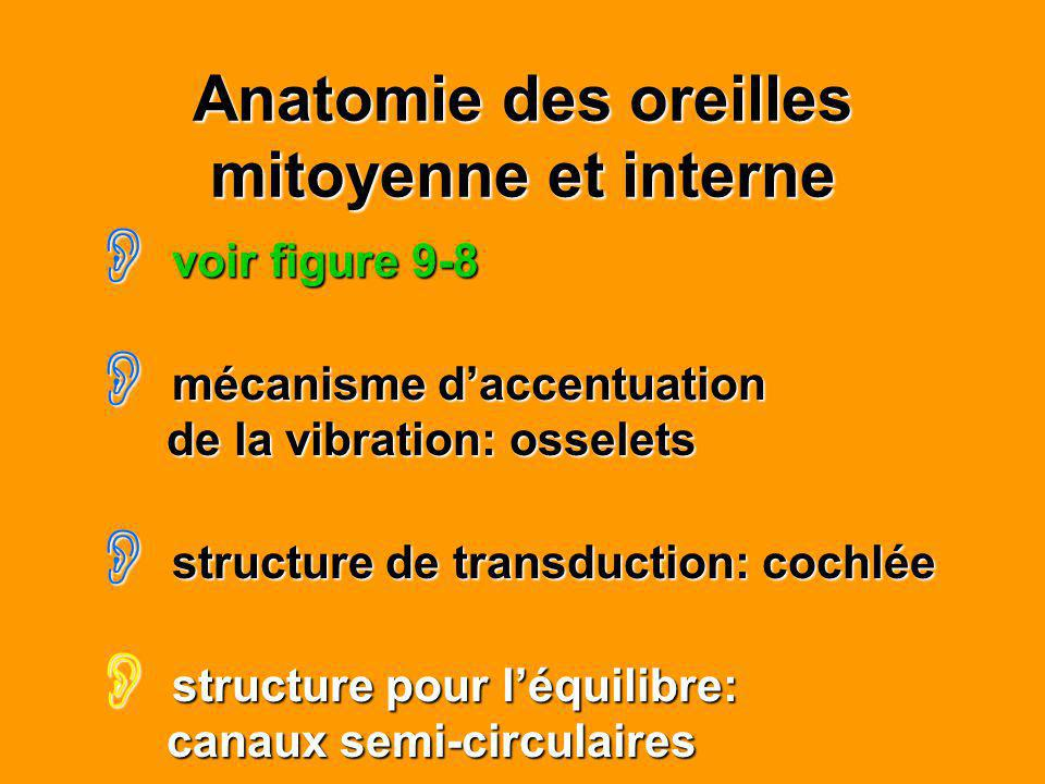 Anatomie des oreilles mitoyenne et interne voir figure 9-8 voir figure 9-8 mécanisme daccentuation de la vibration: osselets mécanisme daccentuation d
