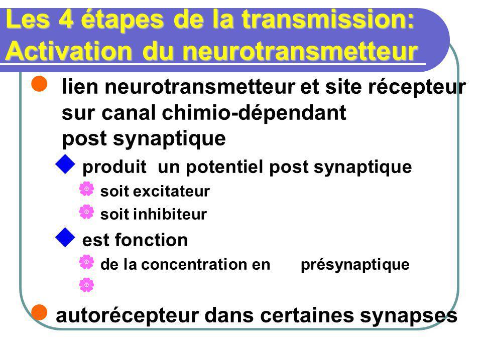 Les 4 étapes de la transmission: Activation du neurotransmetteur lien neurotransmetteur et site récepteur sur canal chimio-dépendant post synaptique produit un potentiel post synaptique soit excitateur soit inhibiteur est fonction de la concentration en présynaptique autorécepteur dans certaines synapses