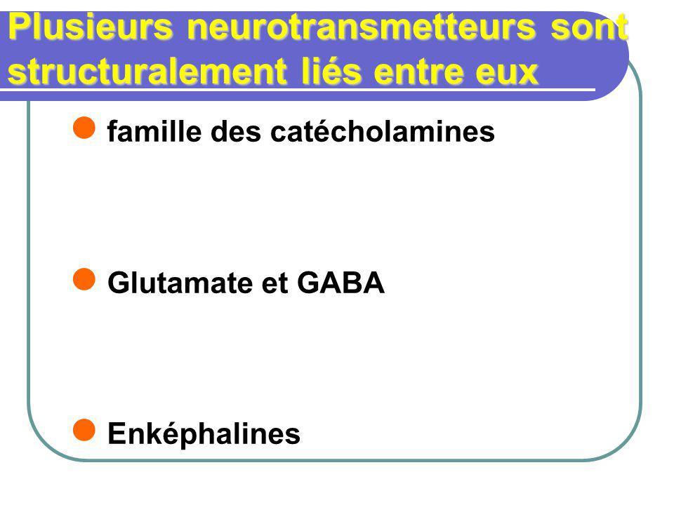 Plusieurs neurotransmetteurs sont structuralement liés entre eux famille des catécholamines Glutamate et GABA Enképhalines