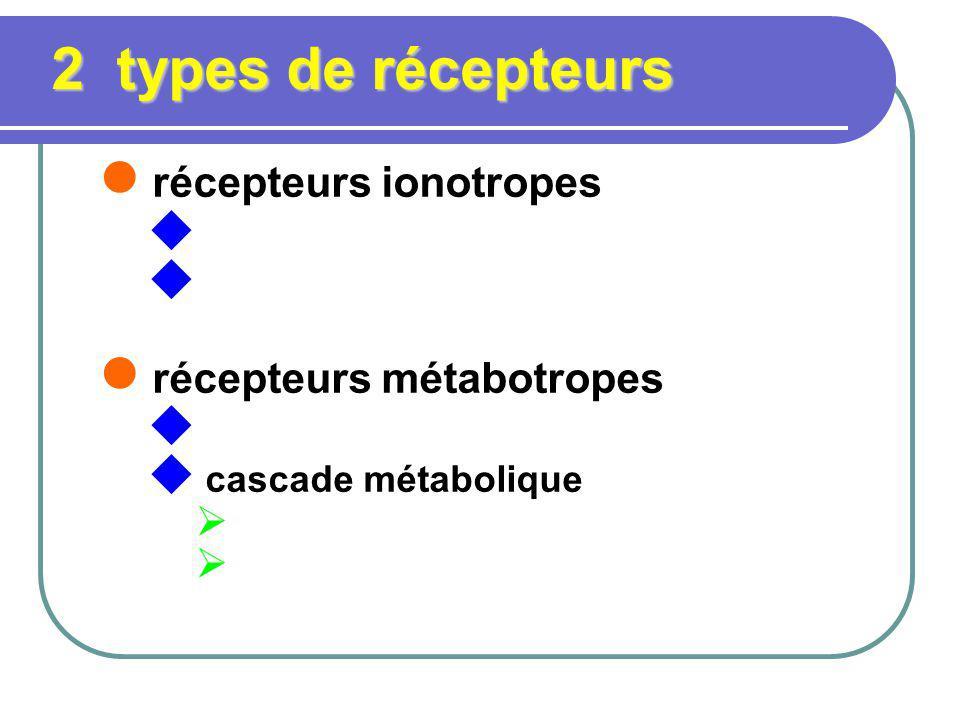 2 types de récepteurs récepteurs ionotropes récepteurs métabotropes cascade métabolique