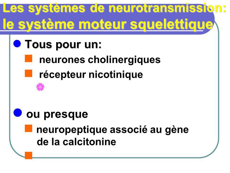 Les systèmes de neurotransmission: le système moteur squelettique Tous pour un: Tous pour un: neurones cholinergiques récepteur nicotinique ou presque neuropeptique associé au gène de la calcitonine