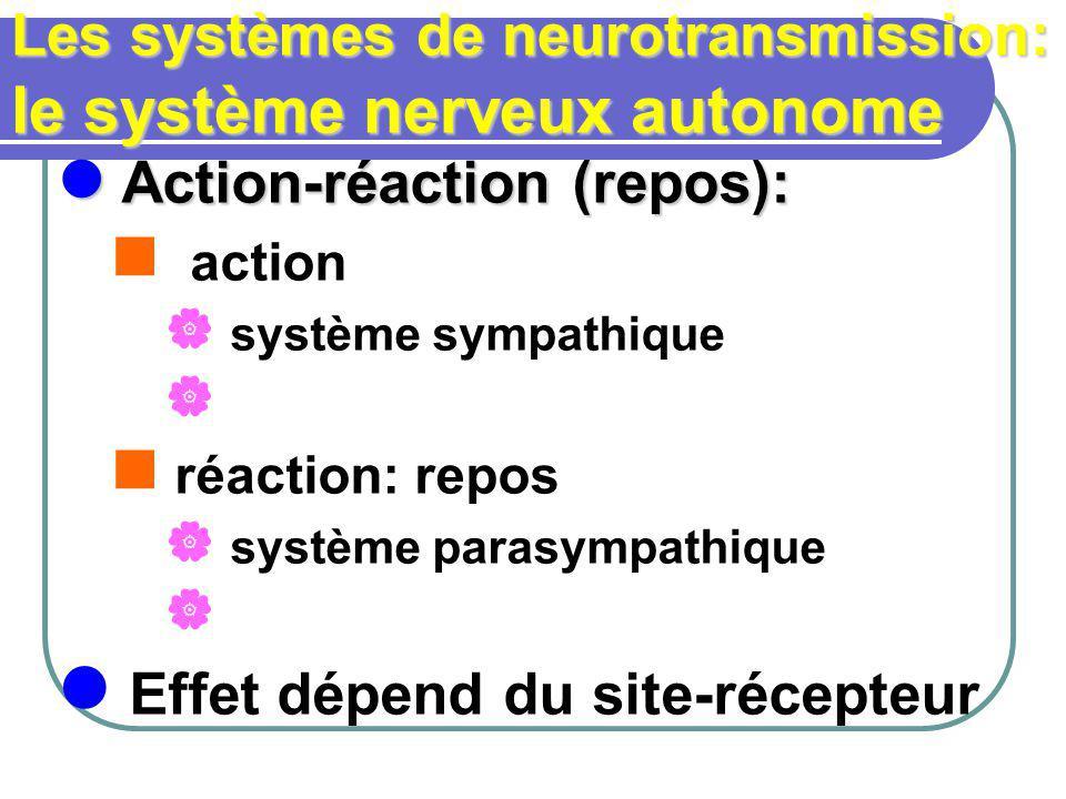 Les systèmes de neurotransmission: le système nerveux autonome Action-réaction (repos): Action-réaction (repos): action système sympathique réaction: repos système parasympathique Effet dépend du site-récepteur