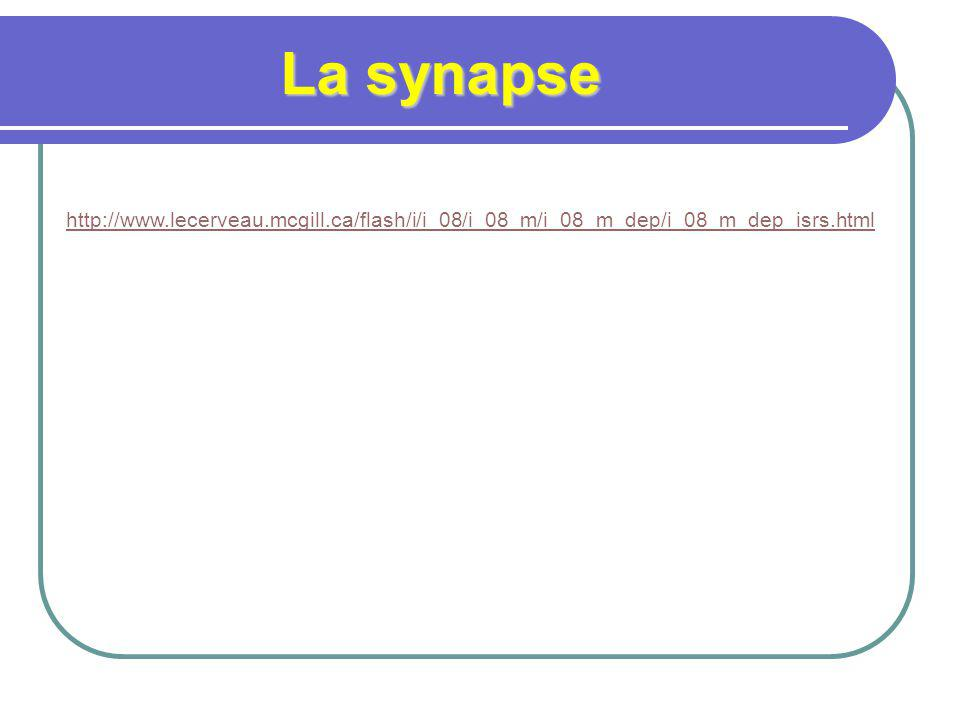 La synapse http://www.lecerveau.mcgill.ca/flash/i/i_08/i_08_m/i_08_m_dep/i_08_m_dep_isrs.html