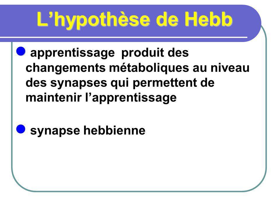 Lhypothèse de Hebb apprentissage produit des changements métaboliques au niveau des synapses qui permettent de maintenir lapprentissage synapse hebbienne
