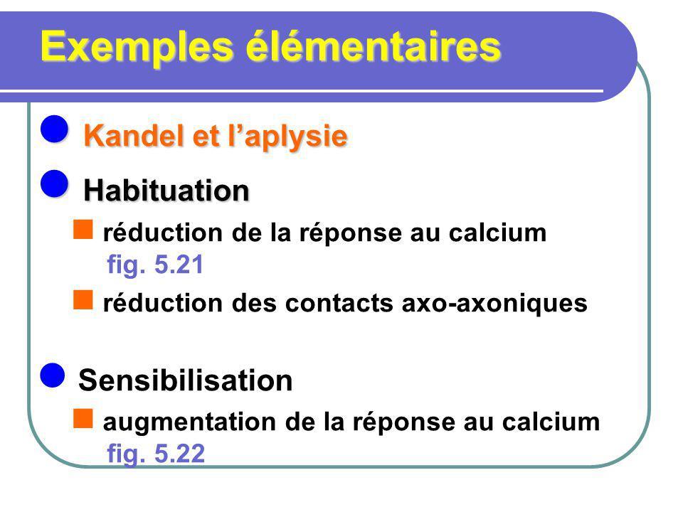 Exemples élémentaires Kandel et laplysie Kandel et laplysie Habituation Habituation réduction de la réponse au calcium fig. 5.21 réduction des contact