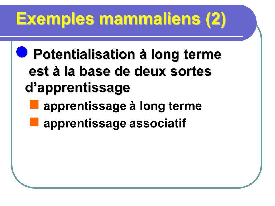 Exemples mammaliens (2) Potentialisation à long terme est à la base de deux sortes dapprentissage Potentialisation à long terme est à la base de deux sortes dapprentissage apprentissage à long terme apprentissage associatif