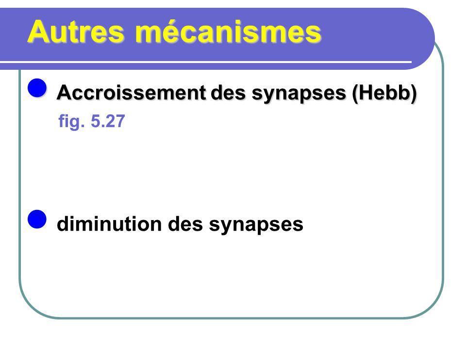 Autres mécanismes Accroissement des synapses (Hebb) Accroissement des synapses (Hebb) fig. 5.27 diminution des synapses