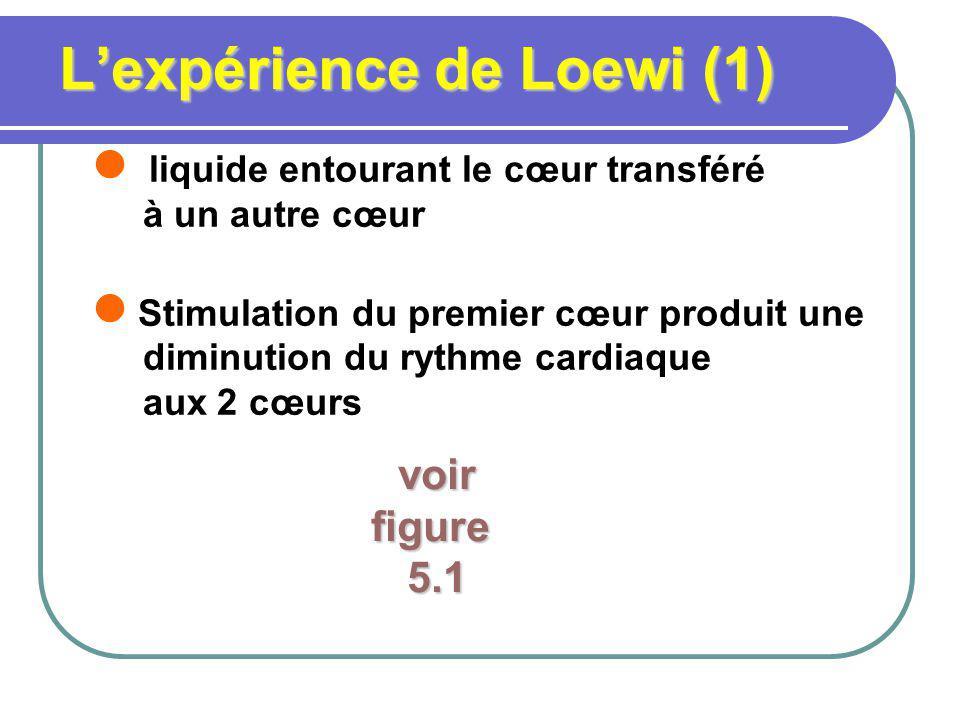 Lexpérience de Loewi (1) liquide entourant le cœur transféré à un autre cœur Stimulation du premier cœur produit une diminution du rythme cardiaque aux 2 cœurs voir voirfigure 5.1 5.1