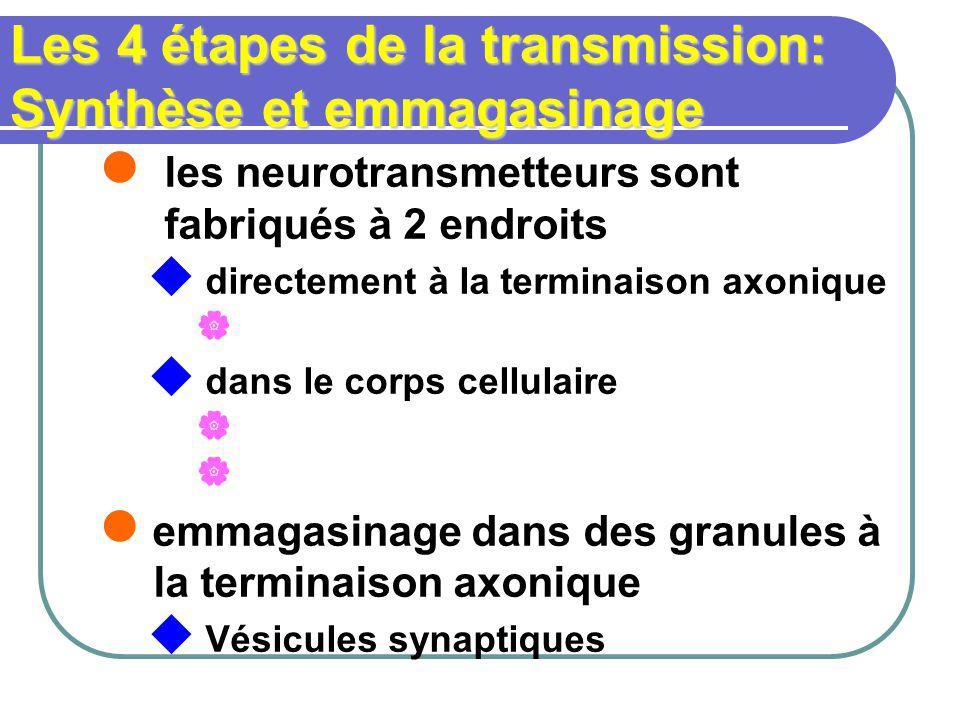 Les 4 étapes de la transmission: Synthèse et emmagasinage les neurotransmetteurs sont fabriqués à 2 endroits directement à la terminaison axonique dans le corps cellulaire emmagasinage dans des granules à la terminaison axonique Vésicules synaptiques
