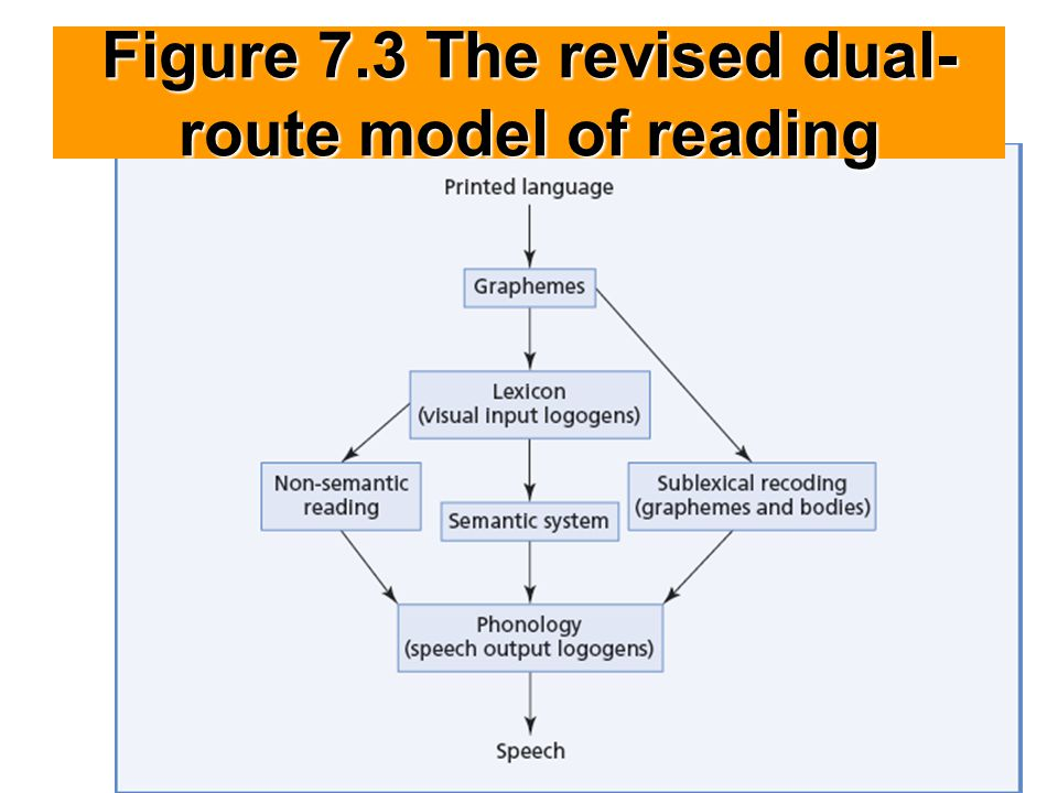 Figure 7.3 The revised dual- route model of reading