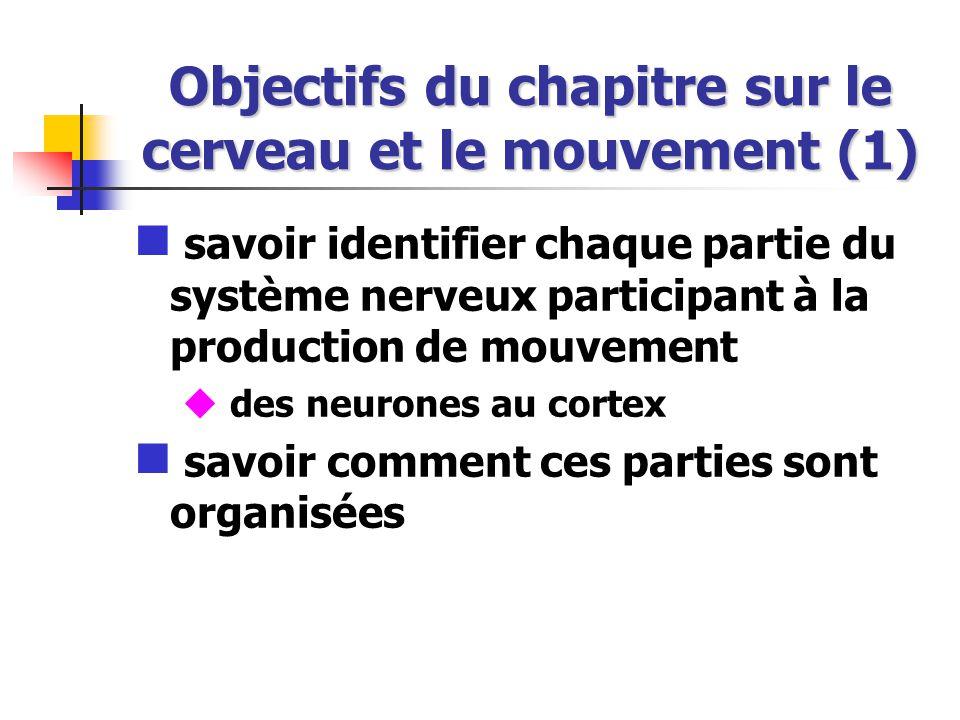Objectifs du chapitre sur le cerveau et le mouvement (1) savoir identifier chaque partie du système nerveux participant à la production de mouvement des neurones au cortex savoir comment ces parties sont organisées
