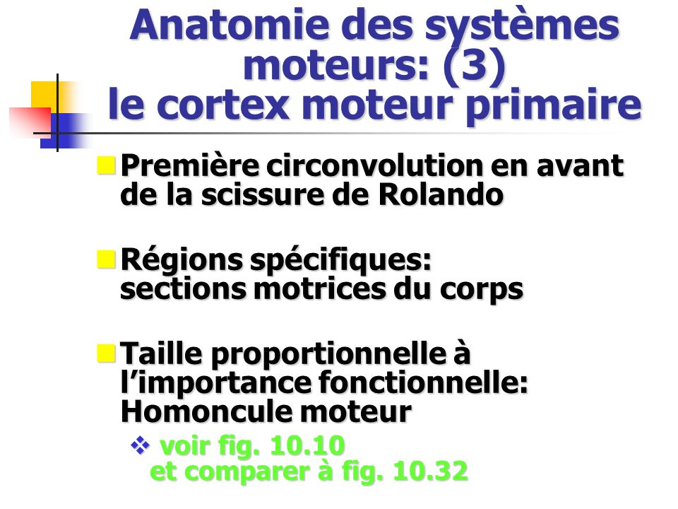 Anatomie des systèmes moteurs: (3) le cortex moteur primaire Première circonvolution en avant de la scissure de Rolando Première circonvolution en ava