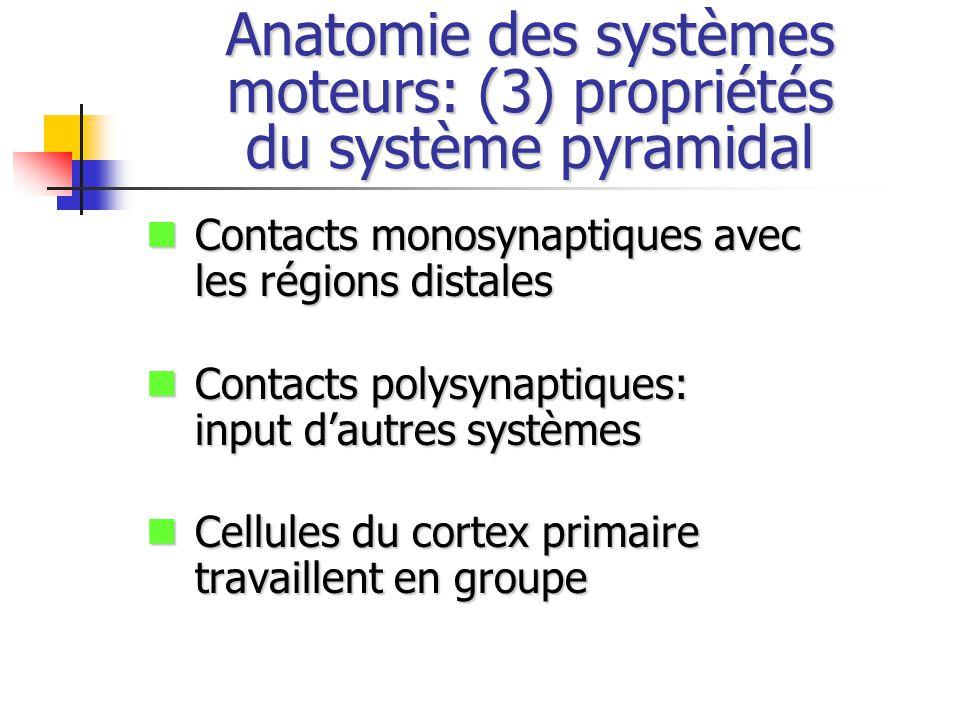 Anatomie des systèmes moteurs: (3) propriétés du système pyramidal Contacts monosynaptiques avec les régions distales Contacts monosynaptiques avec les régions distales Contacts polysynaptiques: input dautres systèmes Contacts polysynaptiques: input dautres systèmes Cellules du cortex primaire travaillent en groupe Cellules du cortex primaire travaillent en groupe