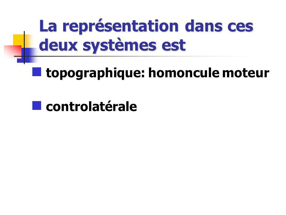 La représentation dans ces deux systèmes est topographique: homoncule moteur controlatérale