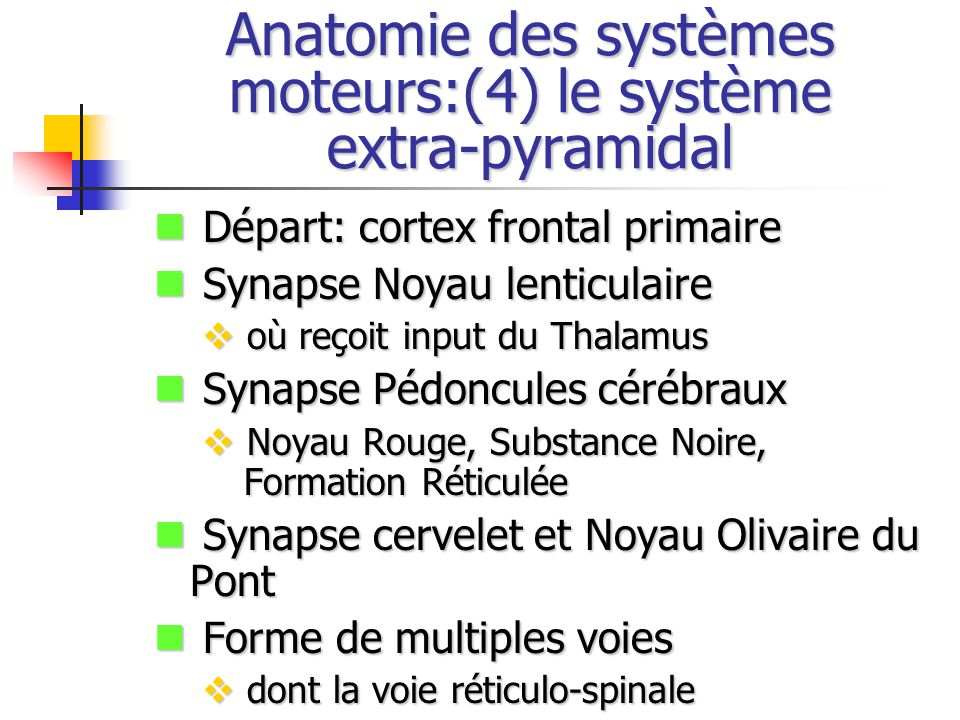 Anatomie des systèmes moteurs:(4) le système extra-pyramidal Départ: cortex frontal primaire Départ: cortex frontal primaire Synapse Noyau lenticulaire Synapse Noyau lenticulaire où reçoit input du Thalamus où reçoit input du Thalamus Synapse Pédoncules cérébraux Synapse Pédoncules cérébraux Noyau Rouge, Substance Noire, Formation Réticulée Noyau Rouge, Substance Noire, Formation Réticulée Synapse cervelet et Noyau Olivaire du Pont Synapse cervelet et Noyau Olivaire du Pont Forme de multiples voies Forme de multiples voies dont la voie réticulo-spinale dont la voie réticulo-spinale
