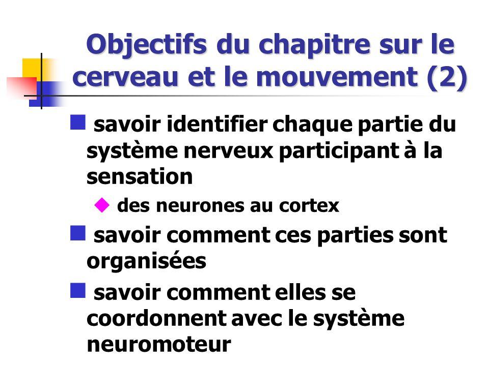 Objectifs du chapitre sur le cerveau et le mouvement (2) savoir identifier chaque partie du système nerveux participant à la sensation des neurones au cortex savoir comment ces parties sont organisées savoir comment elles se coordonnent avec le système neuromoteur