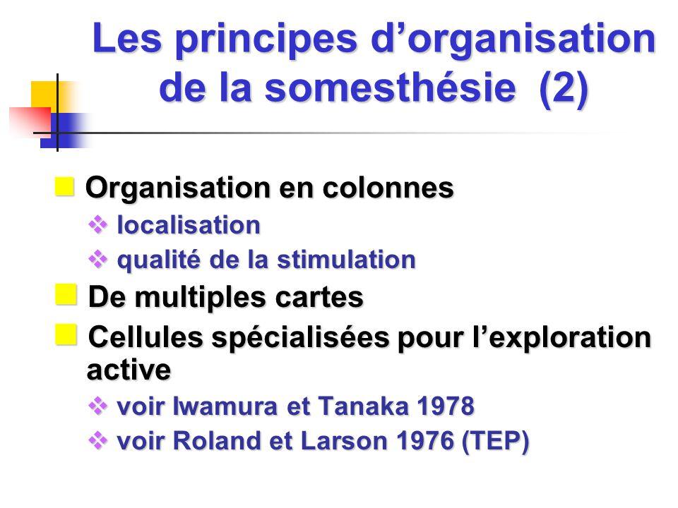 Les principes dorganisation de la somesthésie (2) Organisation en colonnes Organisation en colonnes localisation localisation qualité de la stimulatio