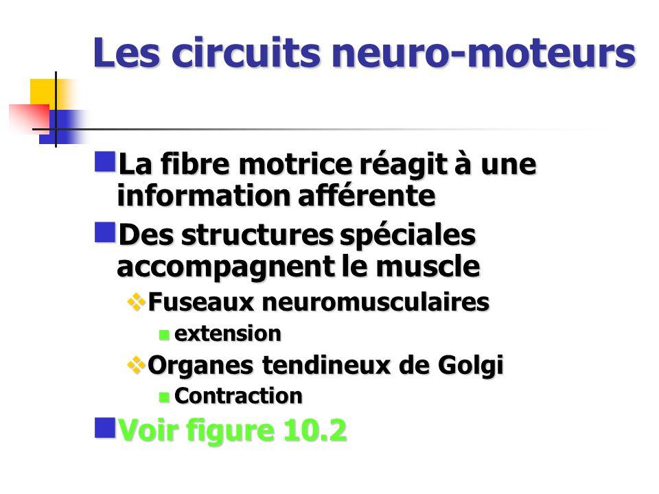 Les circuits neuro-moteurs La fibre motrice réagit à une information afférente La fibre motrice réagit à une information afférente Des structures spéc