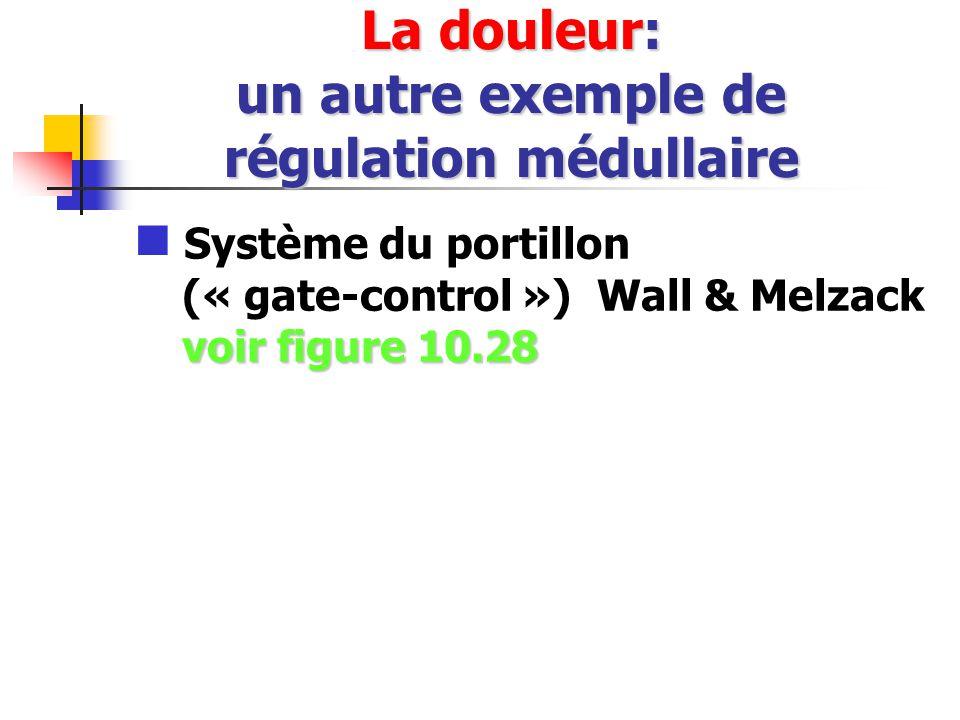 La douleur: un autre exemple de régulation médullaire voir figure 10.28 Système du portillon (« gate-control ») Wall & Melzack voir figure 10.28