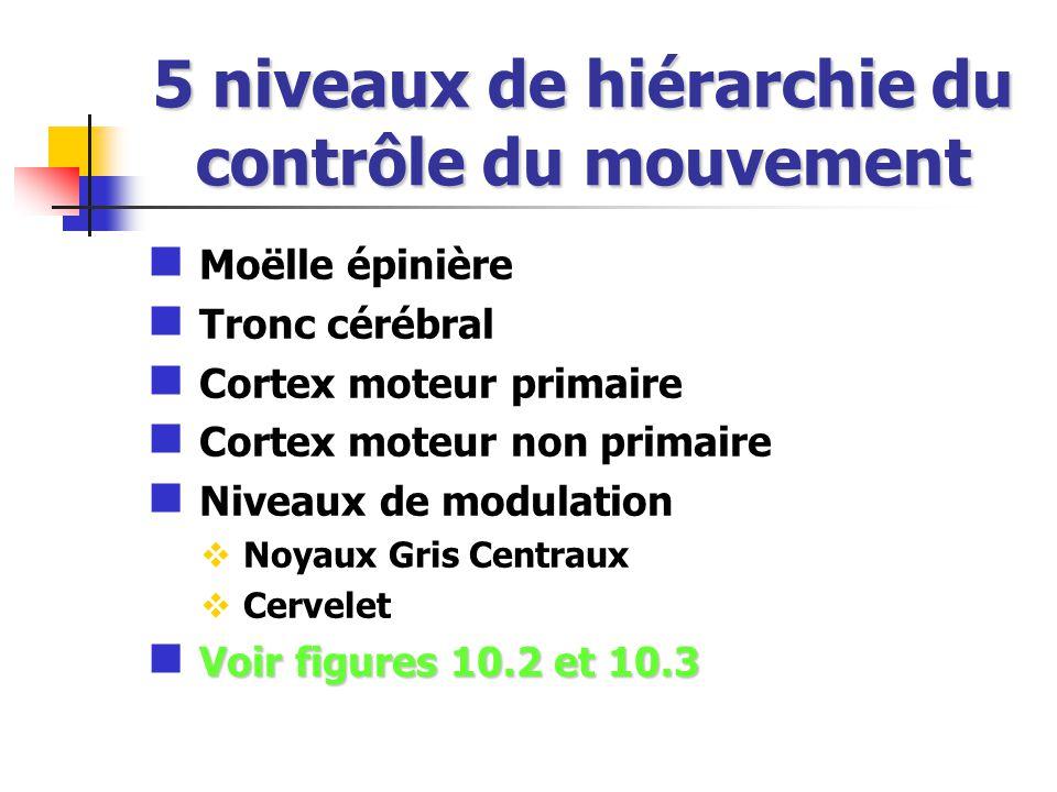 5 niveaux de hiérarchie du contrôle du mouvement Moëlle épinière Tronc cérébral Cortex moteur primaire Cortex moteur non primaire Niveaux de modulation Noyaux Gris Centraux Cervelet Voir figures 10.2 et 10.3