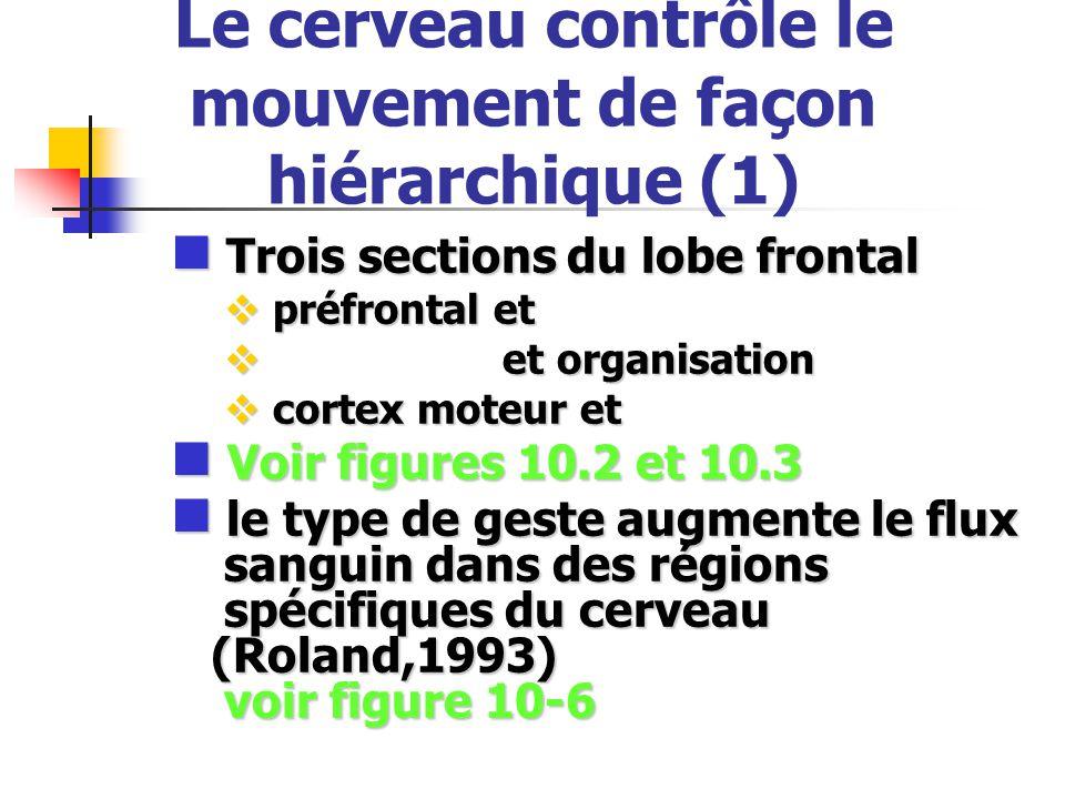 Le cerveau contrôle le mouvement de façon hiérarchique (1) Trois sections du lobe frontal Trois sections du lobe frontal préfrontal et préfrontal et e
