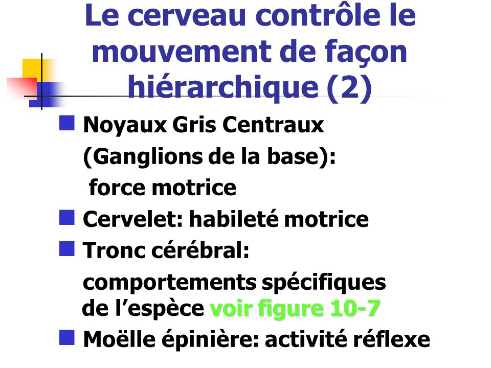 Le cerveau contrôle le mouvement de façon hiérarchique (2) Noyaux Gris Centraux (Ganglions de la base): force motrice Cervelet: habileté motrice Tronc cérébral: voir figure 10-7 comportements spécifiques de lespèce voir figure 10-7 Moëlle épinière: activité réflexe