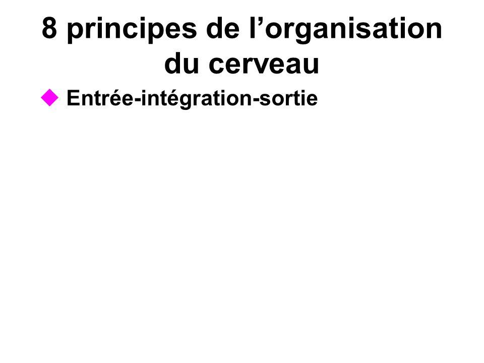 8 principes de lorganisation du cerveau Entrée-intégration-sortie