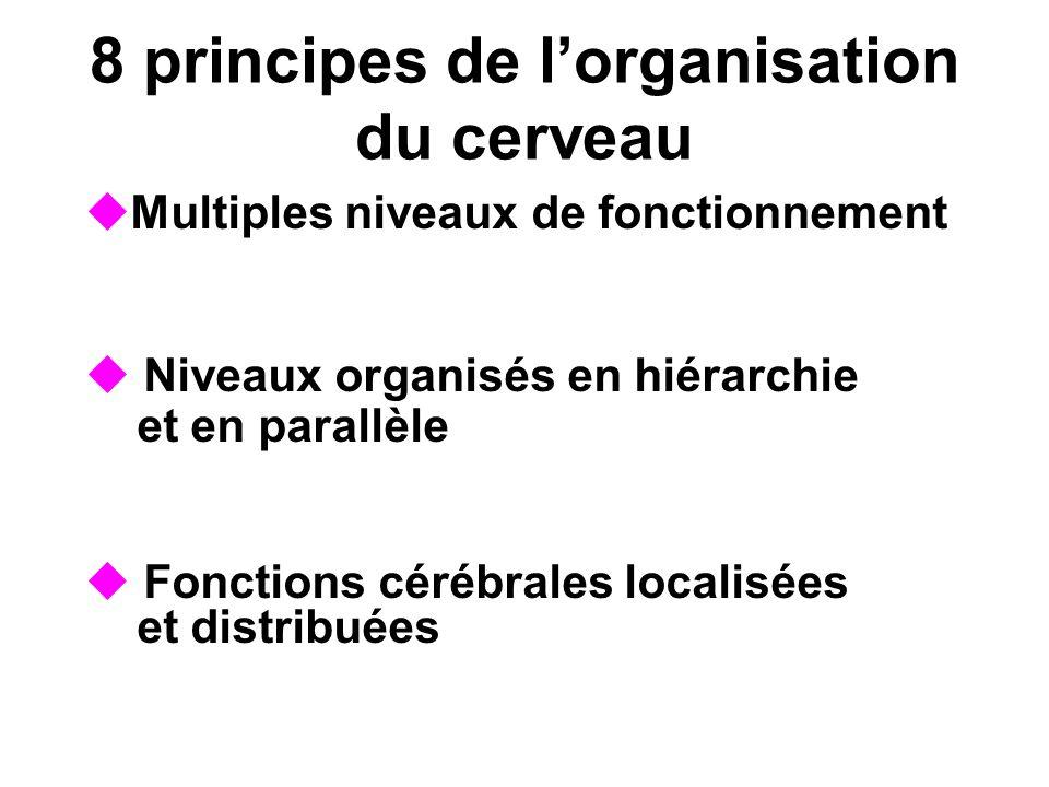 8 principes de lorganisation du cerveau Multiples niveaux de fonctionnement Niveaux organisés en hiérarchie et en parallèle Fonctions cérébrales local