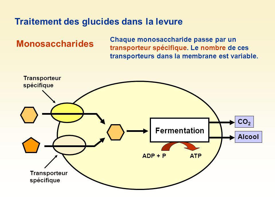 Fermentation CO 2 Alcool Traitement des glucides dans la levure Monosaccharides Transporteur spécifique Chaque monosaccharide passe par un transporteu