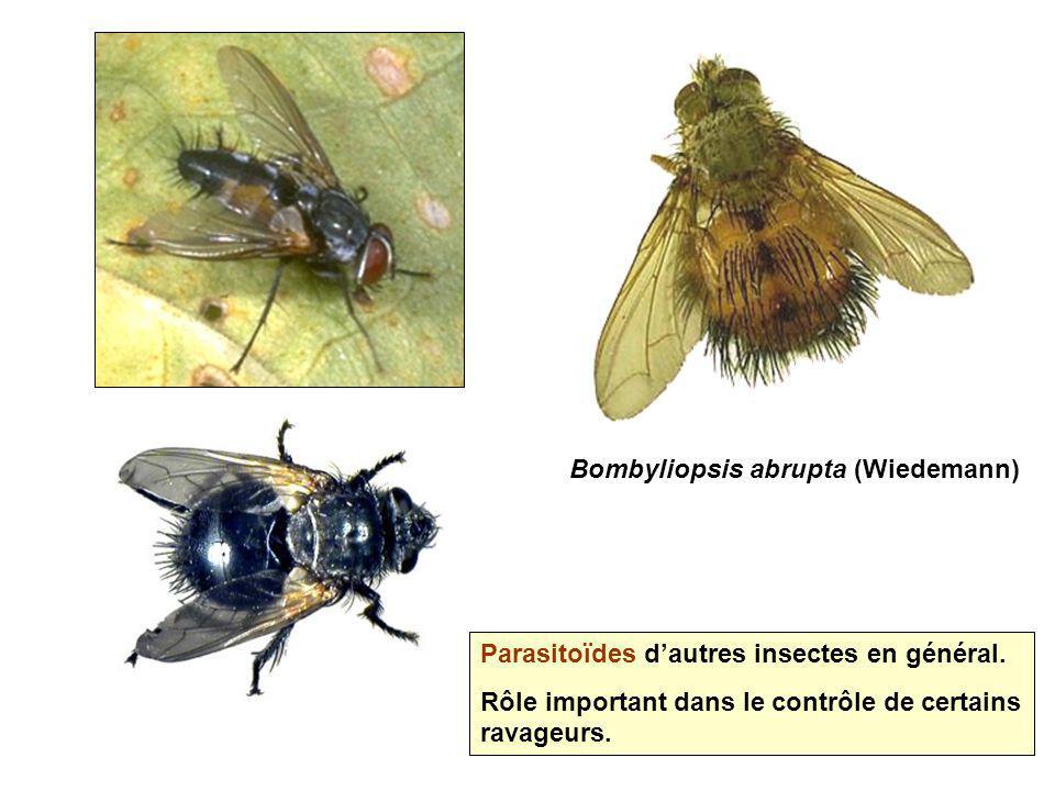 Bombyliopsis abrupta (Wiedemann) Parasitoïdes dautres insectes en général. Rôle important dans le contrôle de certains ravageurs.