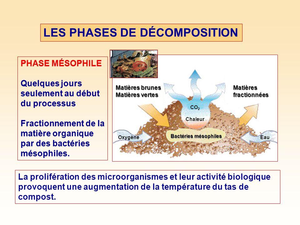 LES PHASES DE DÉCOMPOSITION PHASE MÉSOPHILE Quelques jours seulement au début du processus Fractionnement de la matière organique par des bactéries mésophiles.