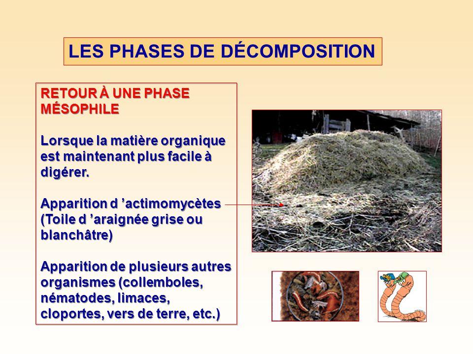LES PHASES DE DÉCOMPOSITION RETOUR À UNE PHASE MÉSOPHILE Lorsque la matière organique est maintenant plus facile à digérer.