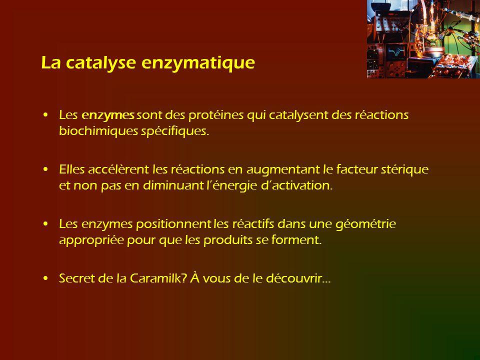 La catalyse enzymatique Les enzymes sont des protéines qui catalysent des réactions biochimiques spécifiques. Elles accélèrent les réactions en augmen