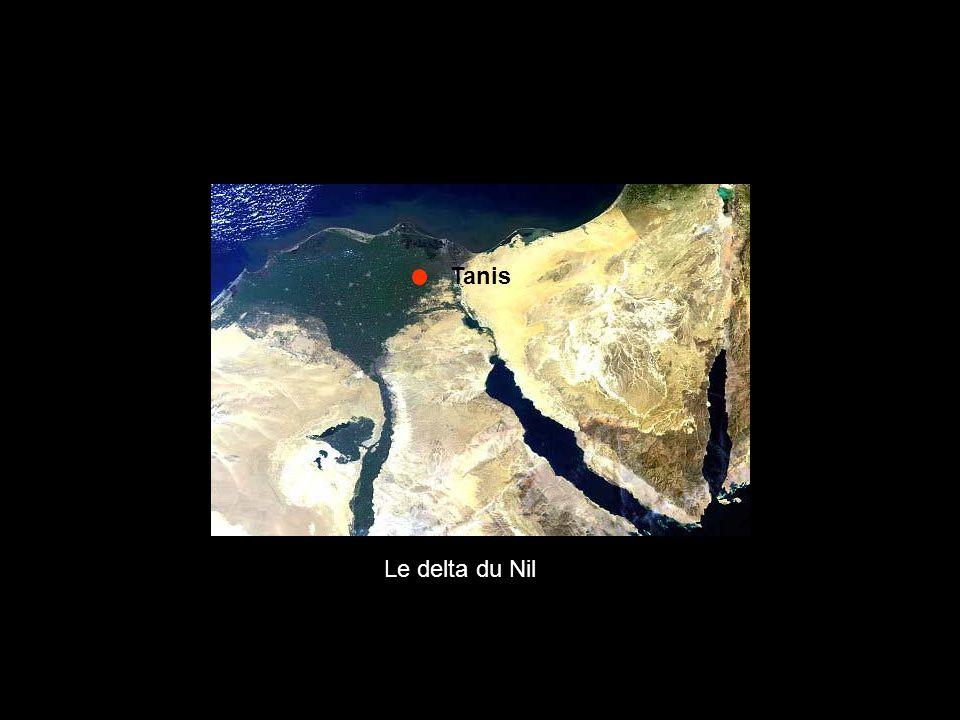 Tanis Le delta du Nil
