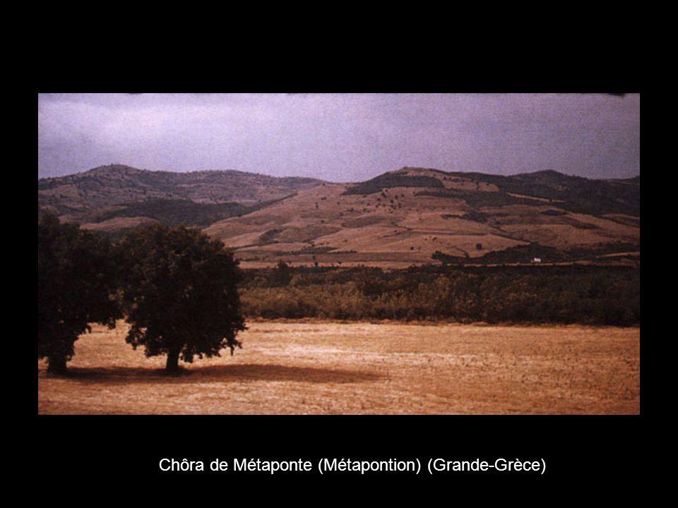 Chôra de Métaponte (Métapontion) (Grande-Grèce)