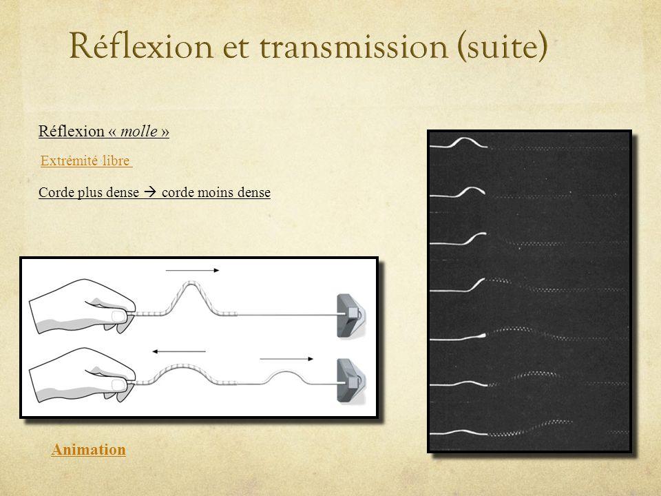 Animation Réflexion « molle » Extrémité libre Corde plus dense corde moins dense