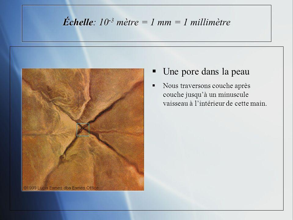 Échelle: 10 -3 mètre = 1 mm = 1 millimètre Une pore dans la peau Nous traversons couche après couche jusquà un minuscule vaisseau à lintérieur de cette main.