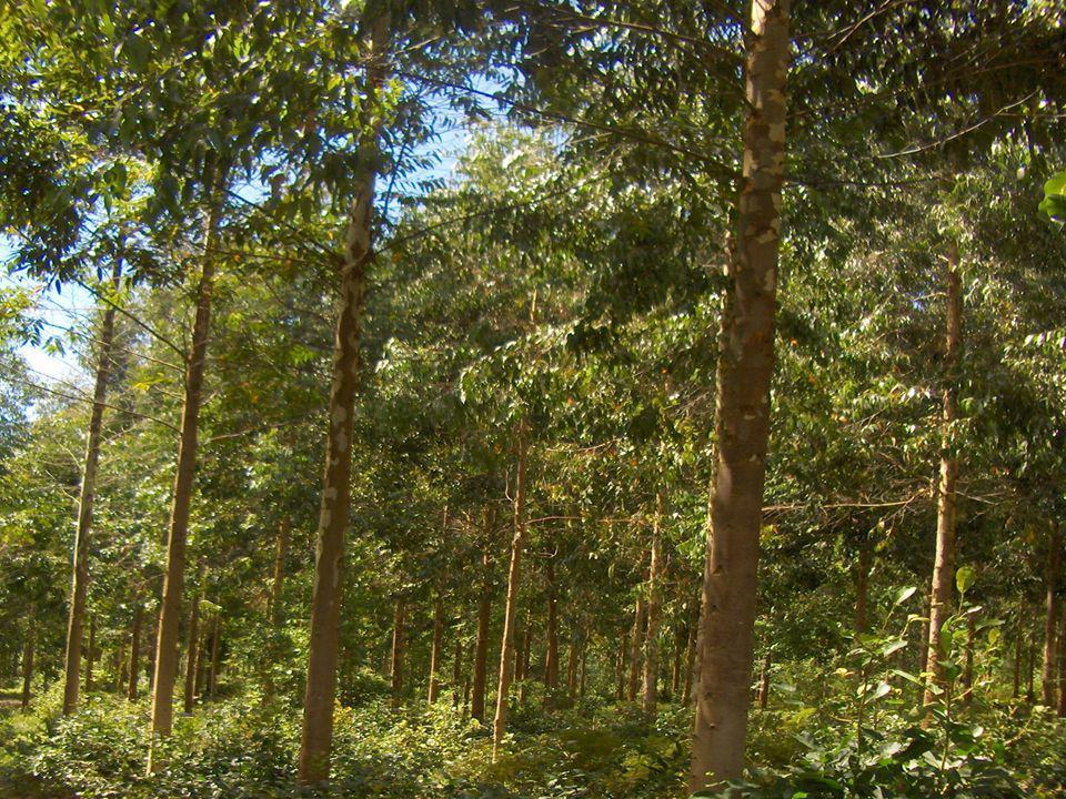 Coopérative d aménagement forestier de la Baie des Chaleurs Merci de votre attention et bonne chance dans votre carrière