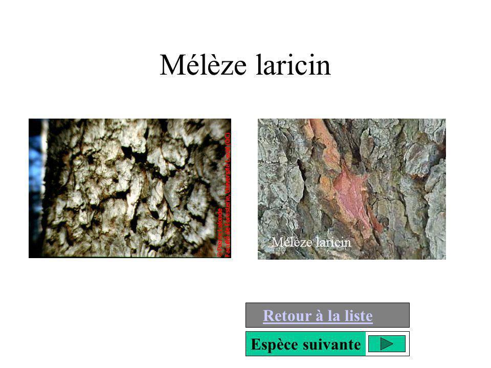 Mélèze laricin Retour à la liste Espèce suivante