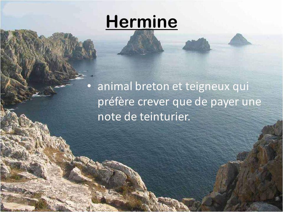 Henaf renard breton sentant le pâté