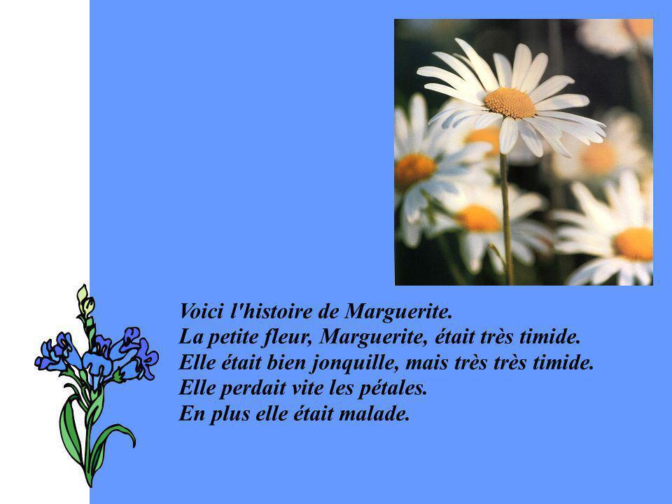 Voici l'histoire de Marguerite. La petite fleur, Marguerite, était très timide. Elle était bien jonquille, mais très très timide. Elle perdait vite le