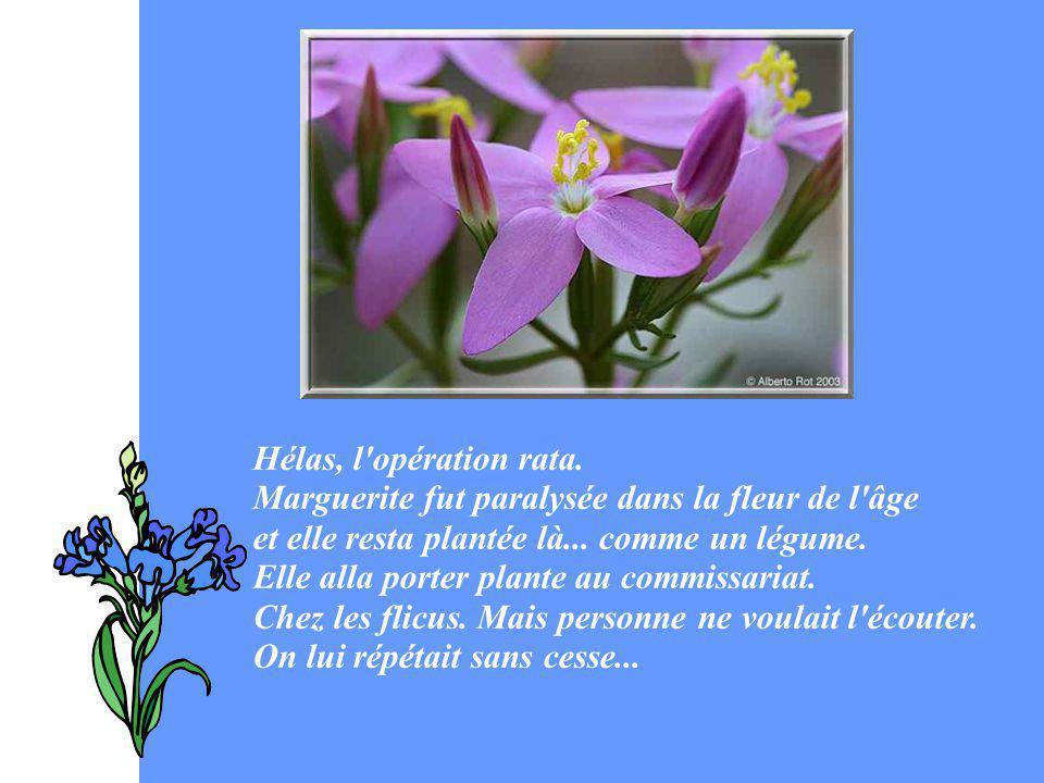 Hélas, l'opération rata. Marguerite fut paralysée dans la fleur de l'âge et elle resta plantée là... comme un légume. Elle alla porter plante au commi